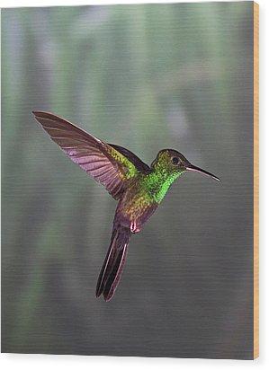 Hummingbird Wood Print by David Tipling