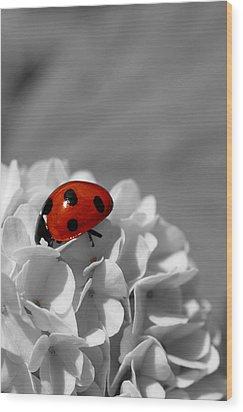 Lady Bug Sc Wood Print by Martina Fagan