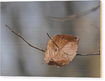 Landed Wood Print