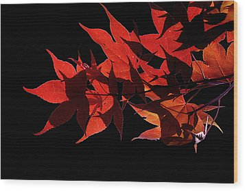 Leaves Of Red Wood Print by Heather Applegate