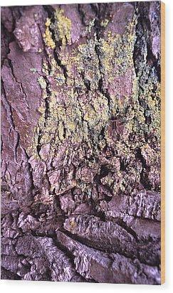 Lichen On Tree Bark Wood Print by John Foxx