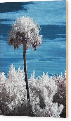 Lonesome Palm Wood Print by Bob Pomeroy