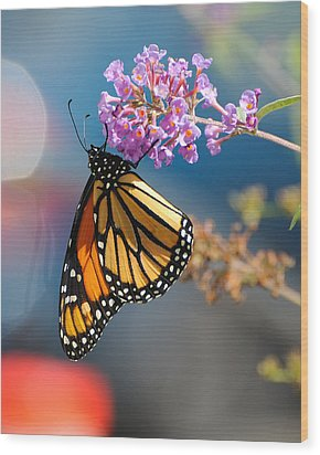 Monarch 2011 E Wood Print