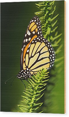 Monarch Butterfly Wood Print by The Photography Factory