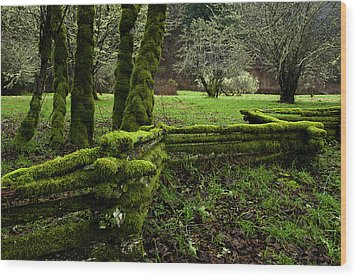Mossy Fence 2 Wood Print by Bob Christopher