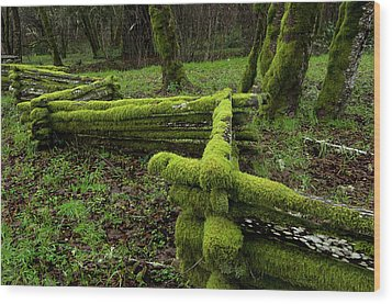 Mossy Fence 4 Wood Print by Bob Christopher