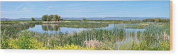 National Wildlife Preserve Marshes In Klamath Falls Oregon. Wood Print by Gino Rigucci