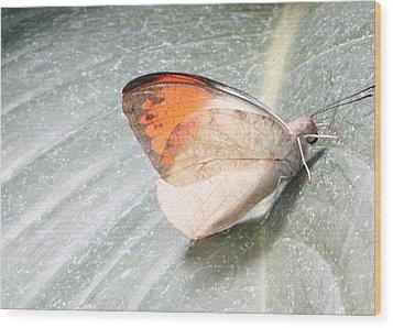 Orangetip Wood Print