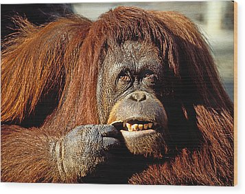 Orangutan  Wood Print by Garry Gay