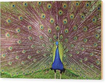 Peacock Wood Print by Carlos Caetano