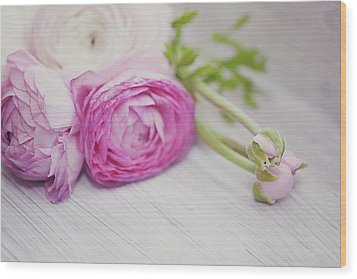 Pink Ranunculus Flowers On White Wooden Shelf Wood Print by Isabelle Lafrance Photography