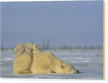 Polar Bear And Her Cub Resting Wood Print by Norbert Rosing