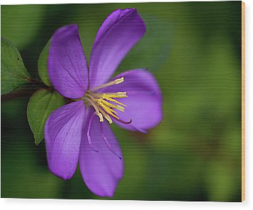 Purple Flower Macro Wood Print by Dan McManus