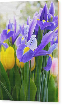 Purple Iris On A Spring Day Wood Print by Daphne Sampson