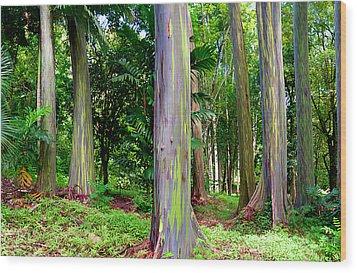 Rainbow Eucalyptus Wood Print by Monica and Michael Sweet