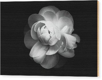 Ranunculus Flower Wood Print by Annfrau