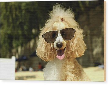 Smiling Poodle Wearing Sunglasses On Beach Wood Print by Stephanie Graf-Vocat - SGV Photography
