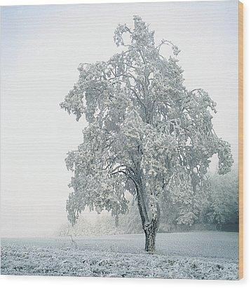 Snowy Winter Landscape Wood Print by John Foxx