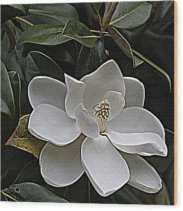 Southern Magnolia Wood Print