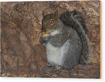 Wood Print featuring the photograph Squirrell by Pedro Cardona