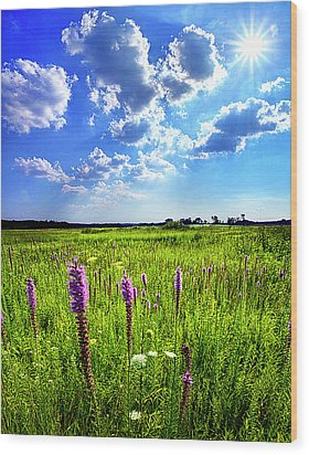 Summer Day Wood Print by Phil Koch
