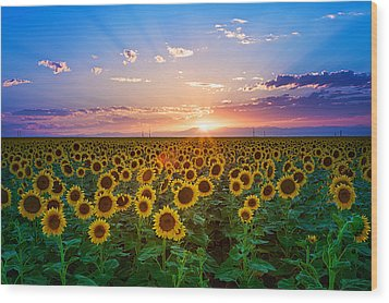 Sunflower Wood Print by Hansrico Photography