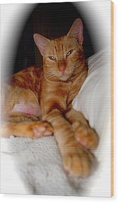 Wood Print featuring the photograph Tabby by The Art of Alice Terrill
