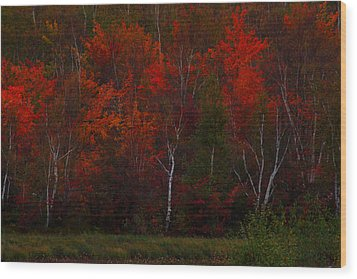 The Reds Have It Wood Print by Marjorie Imbeau