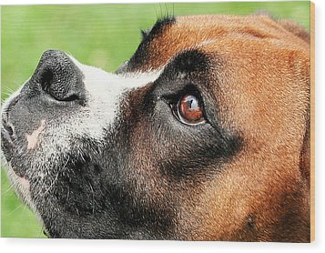 Thinking Of You - Boxer - Vindy Wood Print by Renae Laughner