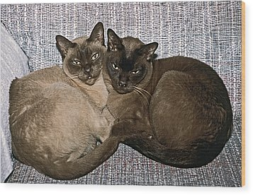 Wood Print featuring the photograph Tonkinese Pals by Sally Weigand