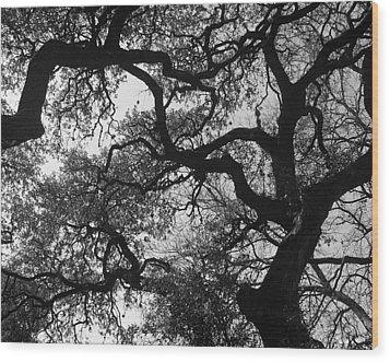 Tree Gazing Wood Print by Lindsey Orlando