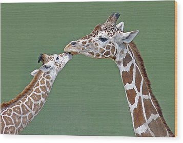 Two Giraffes Wood Print by images by Nancy Chow