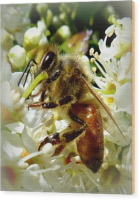 Up Close And Personal Honey Bee Wood Print by Cindy Wright