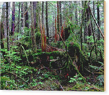 Very Old Forest Wood Print by Anne Havard