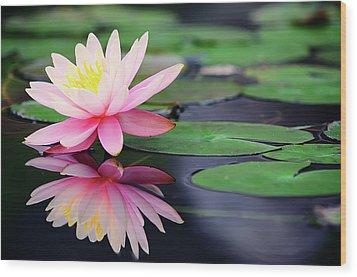 Water Lily In Lake Wood Print by Anakin Tseng
