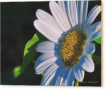 White Daisy Wood Print by William Lallemand