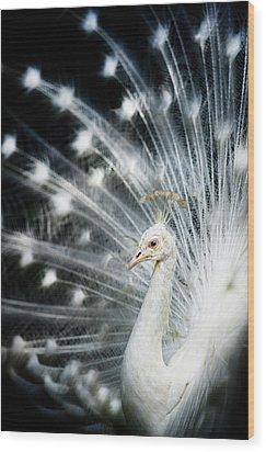White Peacock Wood Print by Copyright (c) Richard Susanto