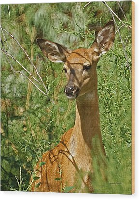 Whitetail Doe Painterly Wood Print by Ernie Echols