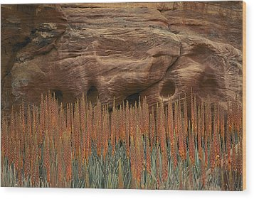 Wildflowers In The Desert Land Of Petra Wood Print by Annie Griffiths