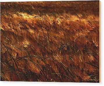 Windblown Wood Print by Jessica Brawley