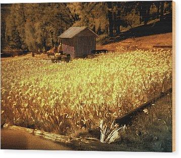 Yellow Daffodil Field Wood Print by Michael Cleere