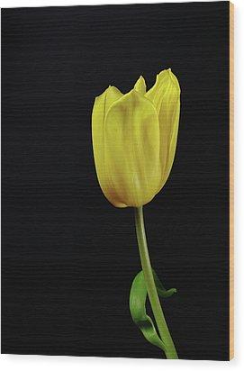 Wood Print featuring the photograph Yellow Tulip by Dariusz Gudowicz
