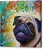A Pugs World Acrylic Print