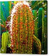 Backlit Cactus Acrylic Print