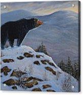 Last Look Black Bear Acrylic Print