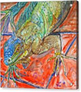 Red Eyed Iguana Acrylic Print