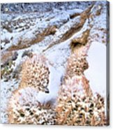 Snow Covered Cactus Below Mount Whitney Eastern Sierras Acrylic Print