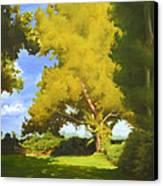 Sycamore Canvas Print