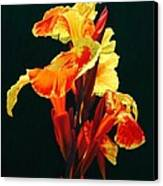 Yellow Cannas Canvas Print
