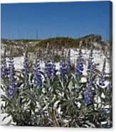 Beach Flora Canvas Print